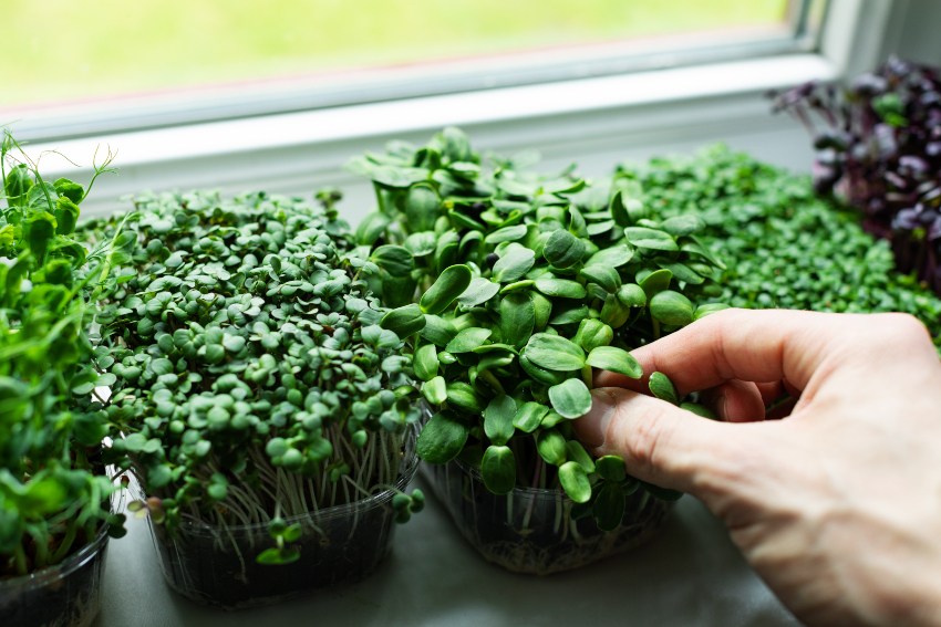 Cultivate-Character-with-a-Garden-Window